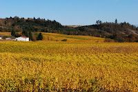 The colors of the vineyards post-harvest is one of the most beautiful sights in the world!