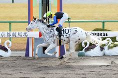 """""""Cult hero BUCHIKO hits the line clear, breaks maiden at start All About Horses, Home On The Range, Horse Pictures, Thoroughbred, Horse Racing, Beautiful Horses, Pet Birds, Bunt, Hero"""