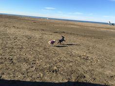 Dog Beach, Beach Walk, Ocean Beach, Most Favorite, Small Dogs, Mornings, Pup, San Francisco, Travel