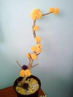 Mimosa original tree https://www.facebook.com/CoriAsens/