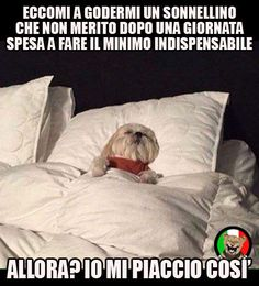 Funny Quotes, Funny Memes, Hilarious, Funny Pics, Italian Girl Problems, Italian Humor, Long Day, Dog Memes, Really Funny