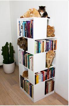 Gatitos lectores