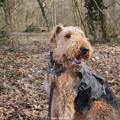 I had a great walk through a forest  today. I hope you have a super day too!