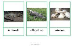 Woordkaarten krokodillen Jungle Safari, Crocodile, Preschool, Water, Dogs, Net, Peter Pan, Animals, Dutch