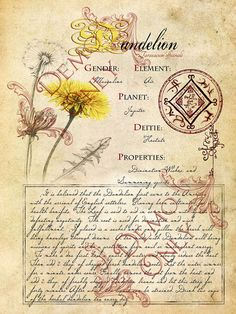 Grimoire, Spell, Herbs and Book of Shadows Pages, Practical Magic; The Cackling Cauldron ~ Book of Shadows 4 page set Le Livre des ombres capricieux Chaudron 4 pages 7 Wiccan Spells, Magick, Witchcraft, Magic Herbs, Herbal Magic, Witch Herbs, Witches Cauldron, Practical Magic, Healing Herbs