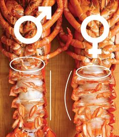 Here's how to know whether a lobster is male or female. Not that it makes any difference in flavor, but you'll look like a genius. Live Lobster, Fresh Lobster, Shellfish Recipes, Seafood Recipes, Canadian Lobster, Seafood Online, Food 101, Lobster Recipes