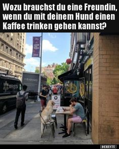 Times Square, Memes, Travel, Drinking Coffee, Friends, Jokes, Funny, Pictures, Dog