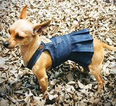 Disfraz de Overall Para Perrita #DisfracesParaPerros #DoggieDoor #Halloween #Disfraces #Perros