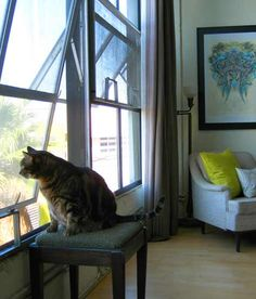 at tonya and mike sutfin's home in emeryville, ca, roosevelt makes an impressive guard cat at 19.5 pounds
