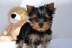 Small dog.