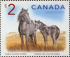 sable island ponies Canadian two dollar stamp Island Horse, Horror Posters, Mail Art, Stamp Collecting, Beautiful Horses, Postage Stamps, Altered Art, Mammals, Pony