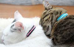 Cats, Animals, Paper, Nice Asses, Gatos, Animales, Animaux, Animal, Cat