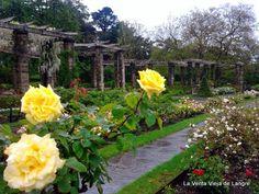 La Venta Vieja de Langre: Turismo Cantabria: Rosas en Mataleñas