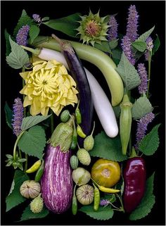 Tips To Help You Succeed With Organic Gardening – Flowers and Gardening Fruit And Veg, Fruits And Veggies, Photo Fruit, Veggie Art, Vida Natural, Beautiful Fruits, Arte Floral, Organic Vegetables, Food Design