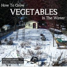 How to grow vegetables in the winter in raised beds and polytunnels including brocoli, kale, salad greens, and carrots.