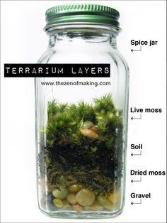 Terrarium How-To
