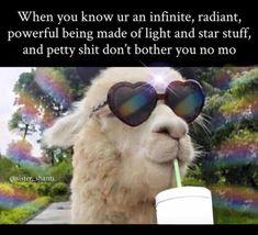 No petty shit lol - Koala Funny - Funny Koala meme - - No petty shit lol The post No petty shit lol appeared first on Gag Dad. Funny Spiritual Memes, Spiritual Quotes, Funny Quotes, Funny Memes, Jokes, Metaphysical Quotes, True Memes, Spiritual Life, Infj