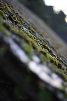 Check out Green moss on blurry wall of bricks by Mosaika on Creative Market Abstract Photos, Bricks, Creative, Wall, Green, Check, Beautiful, Brick, Walls