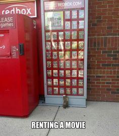 A Guinea Pig renting a movie...