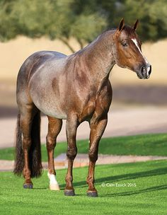 Smart Boons 2005 Red Roan Stallion by Peptoboonsmal out of Smart Little Easter. NRCHA Open Derby Champion, Worlds Richest Stock Horse Champion, Magnificent 7 Open Champion.