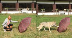 SOMEBODY'S WATCHING ME After watching a person do a trick, such as touching an umbrella, dogs can perform the same one, even when they weren't expecting to be called to action. The results suggest dogs remember personal experiences. ~~ Mirko Lui