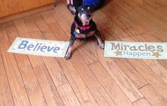 After 2 surgeries, Devon, our 8 year old Min Pin, was due for a spa day! Devon wants you to know that she feels 110% better after all this special treatment, and is ready to meet her new family. Devon is the ultimate companion dog who loves everyone, human and animal alike. We are accepting applications now, so get yours in quickly. We know Devon will find her loving home soon❤️For info call 559-261-5746 or elderpawsrecue.org or check out our Facebook page.