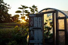 Beetlebung Farm  Image Via: Gabriela Herman