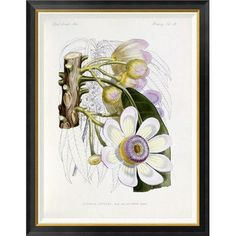 Global Gallery 'Membrillo' by J. G. Keulemans Framed Graphic Art Size: