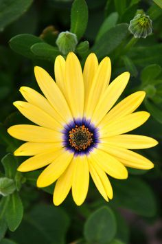 Canmore Alberta Day 1 PhotoChics African Daisy The post Canmore Alberta Day 1 PhotoChics appeared first on Diy Flowers. All Flowers, Amazing Flowers, My Flower, Yellow Flowers, Beautiful Flowers, Cactus Flower, Exotic Flowers, Beautiful Gorgeous, Fresh Flowers
