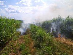 Fotopstryczek : Wypalanie trawy?