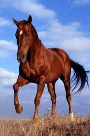 Image result for horse pics for wallpaper
