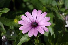 Beautiful Flowers, Explore, Nature, Plants, Flowers, Naturaleza, Plant, Nature Illustration, Off Grid