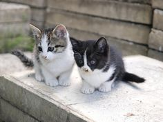 "* * "" We gotta starts explorin'. Yoo goes first."" ---------------------------------[2ND KITTEN:""Noes, yoo goes first and me willz follow."""