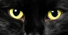 4 Hewan Yang Dipercaya Dapat Mendeteksi Keberadaan Hantu