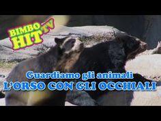 Guardiamo Gli Animali: L'Orso Con Gli Occhiali (Orso Andino)