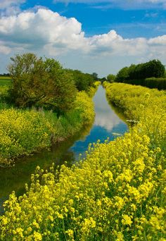 Louth Canal Lincolnshire, England. I was born in the borough of Louth. Lot sof this kind of water, it is flat there.