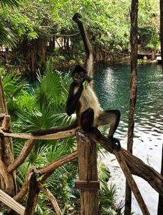 Hands up if you love Fridays! #monkeys #fridayfunday ¡Alza la mano si te gustan los viernes! (Photo credits: Jason Ciity Williams)