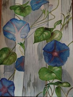 watercolor: morning glory