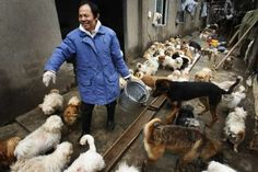 59 Year Old Man Adopts 130 Stray Dogs in Wuhan, Hubei Province, China - Corporation/Rex Shutterstock