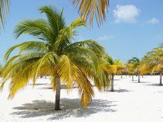 Cayo Largo, Playa Sirena