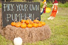 Pumpkin Patch Painting the kids get to pick there own pumpkin and paint it.