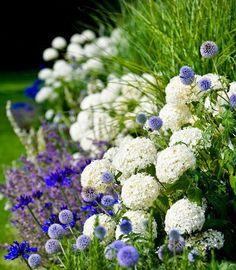 Um jardim para cuidar: AGAPANTOS