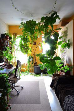いったい何種類の植物がいるの !? 都会のボヘミアン・オアシス