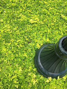 Low Maintenance Ground Covers That Suppress Weeds