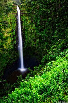 Akaka Falls State Park, Big Island.