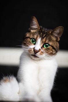 Catnip by celikogeday #animals #animal #pet #pets #animales #animallovers #photooftheday #amazing #picoftheday