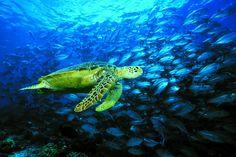Underwater magic in Sabah
