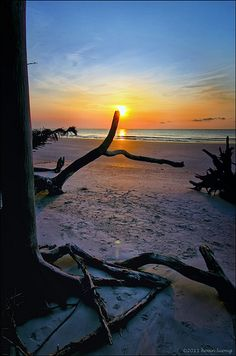 Natural lighted candlestick - Golden hour - Hunting Island State Park, Beaufort, South Carolina