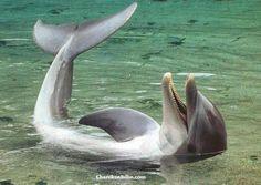 dolphin happy