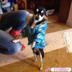 Doudoune matelassée Bleu pour Petit Chien #VetementChiens #Chihuahua - Nouvelle collection de manteaux pour les chiens: Doudoune matelassée Bleu, idéale pour la saison froide, de protéger votre chien du froid que le vent
